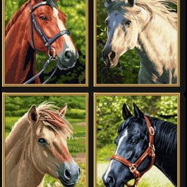 Kone (4 obrazy v balení 18 x 24cm)