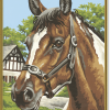 Portrét koňa