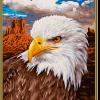 Orol bielohlavý(24x30cm)