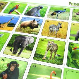Pexeso Zoo foto